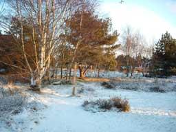 Ferienhaus Sokollek - Garten im Winter
